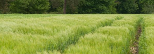 Preview: Fikse boete voor landbouwer uit Beveren die natuurwetgeving overtrad
