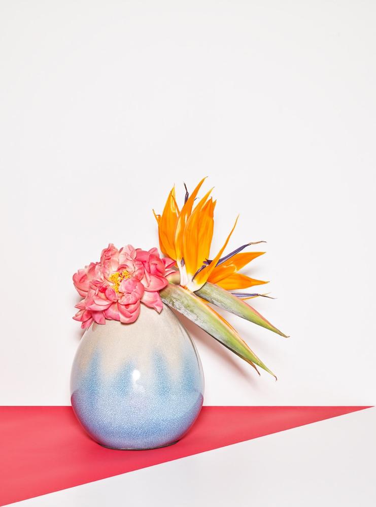 Frederik Vercruysse - The Plant