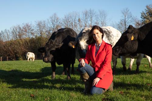 Carrefour agrandit son offre avec la vache des pâturages Filière Qualité Carrefour