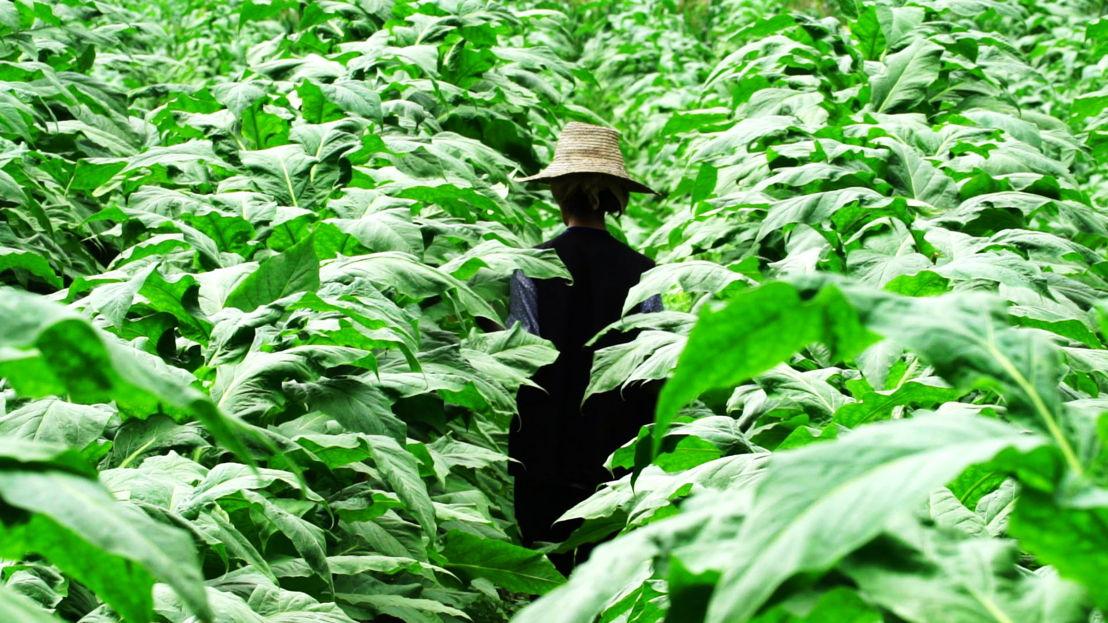 woman in fields