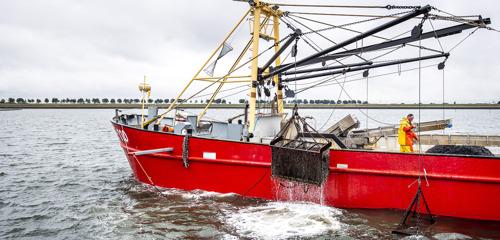 Preview: Jan de mosselman geeft startschot Zeeuws mosselseizoen 2020
