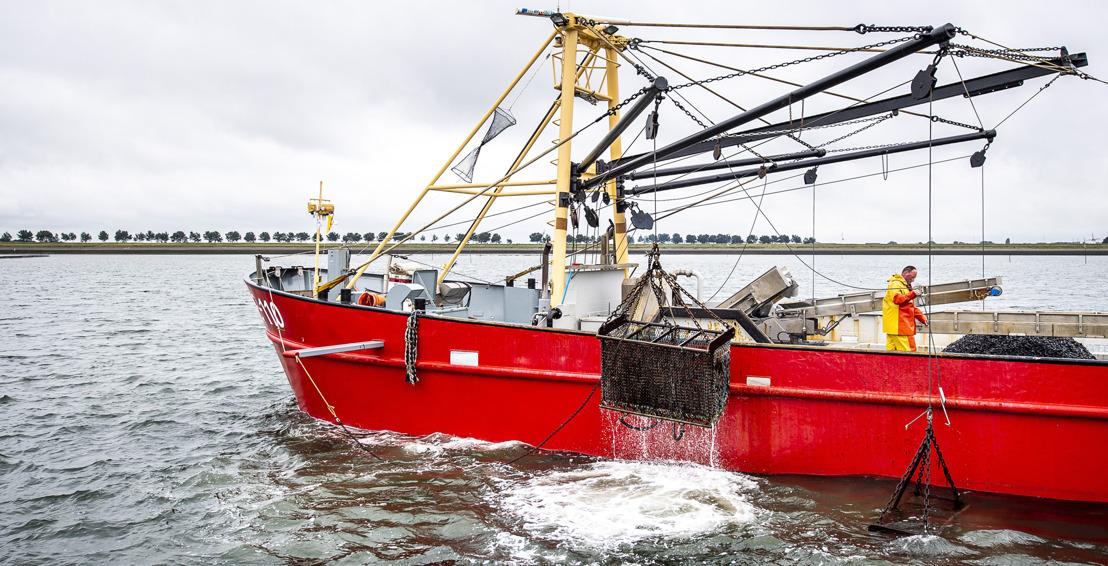 Jan le pêcheur de moules donne le coup d'envoi de la saison 2020 des moules de Zélande