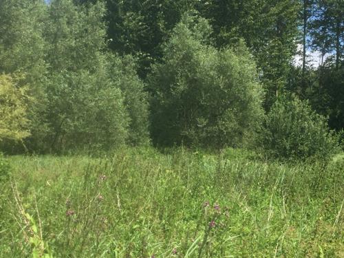 Stad Leuven verhoogt subsidie voor aankoop van natuurgebieden