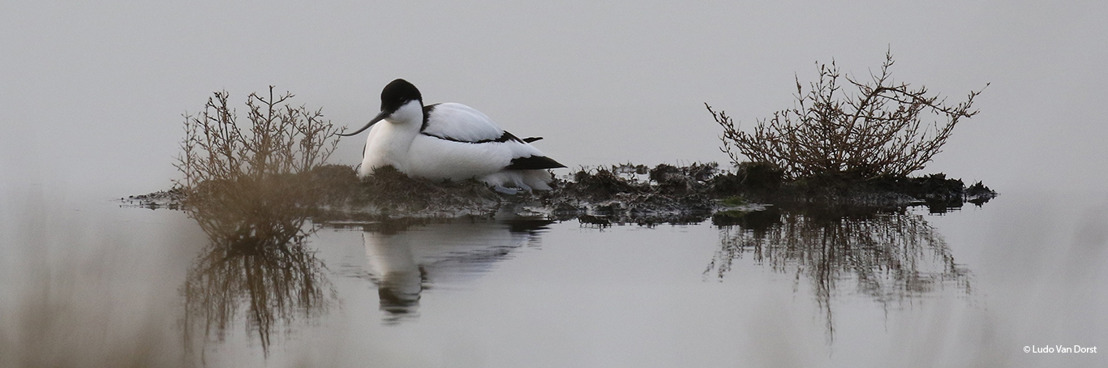 WWF-België en Natuurpunt gaan samen belangrijk vogelgebied in Antwerpse haven herinrichten