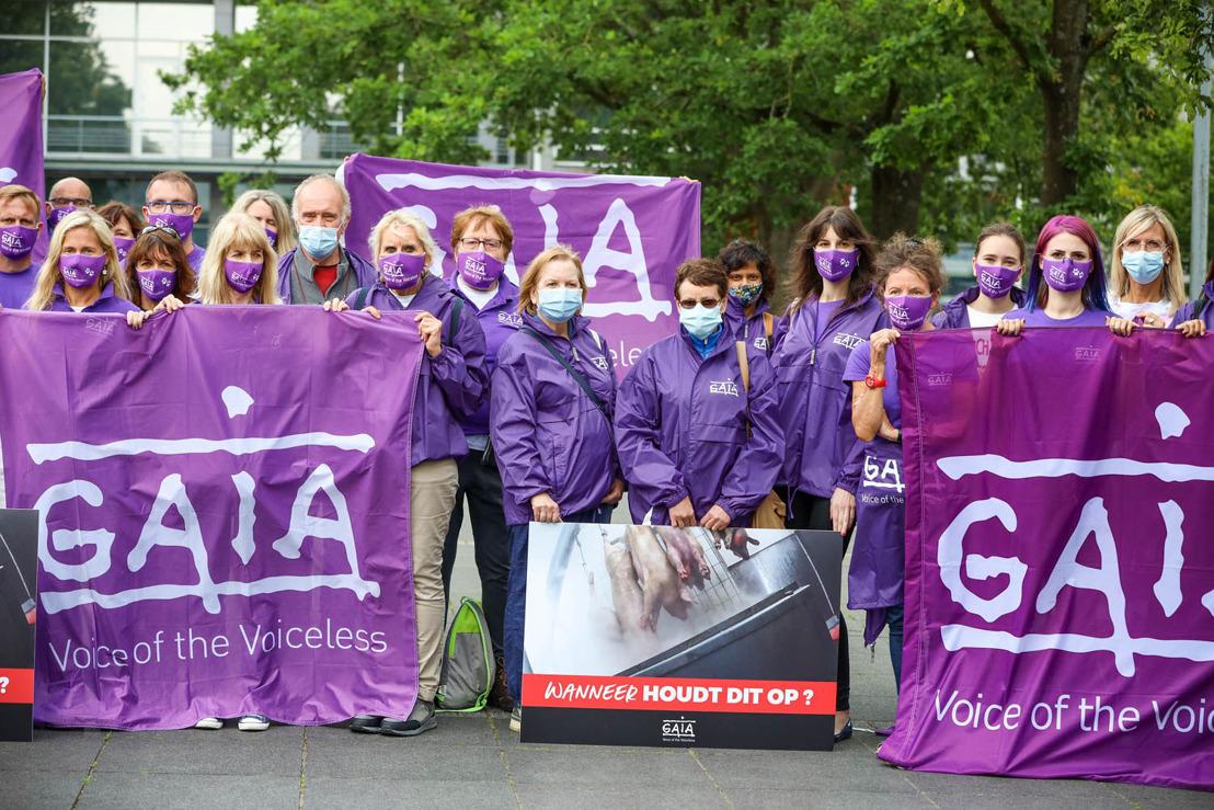 GAIA en Animal Rights hekelen beslissing Bestendige Deputatie West-Vlaanderen Vreedzaam protest aan Provinciehuis tegen uitbreiding slachtcapaciteit horrorslachthuis Tielt