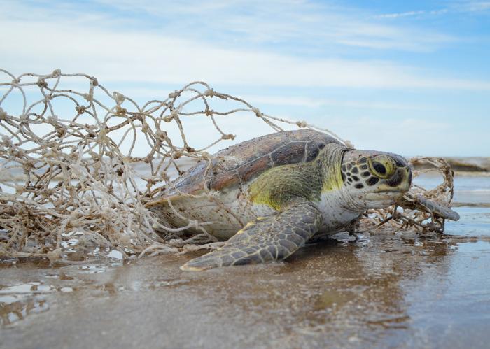 En 2018, más del 90% de la fauna marina asistida presentó afecciones causadas por el hombre
