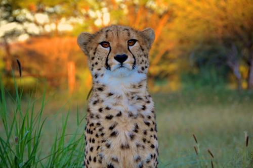 eneloop hjælper truede dyrearter med tur for ambassadørerne