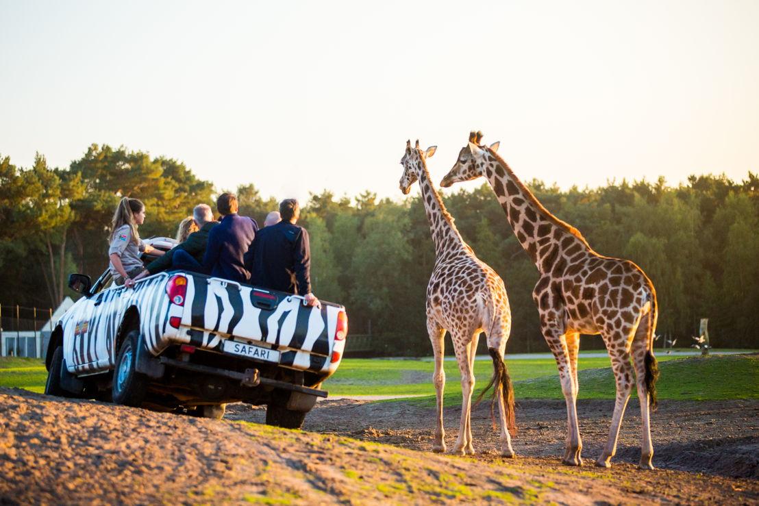 Beekse Bergen Jeepsafari (c) Visit Brabant