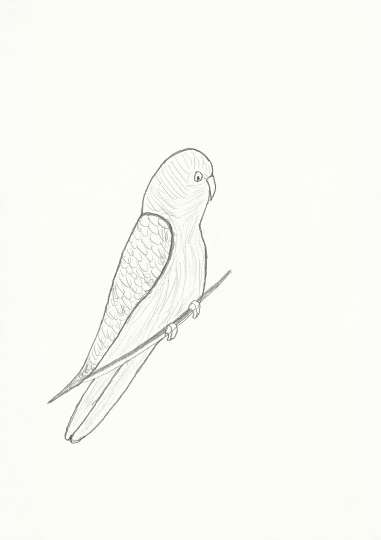 © Leen Voet - Parakeet on a branch