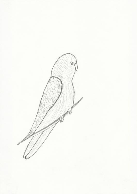 © Leen Voet - Parakeet on a branch