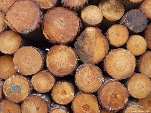 Bois et papier : la politique d'achat durable des villes et communes épinglée dans un rapport de FSC Belgique et du WWF