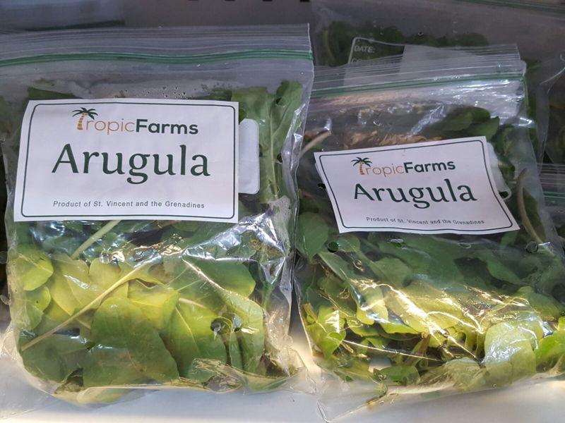 Arugula leaves from St. Vincent and the Grenadines