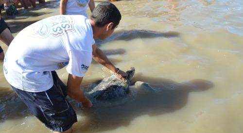 Final feliz: la tortuga que expulsó 14 gramos de plástico volvió al mar