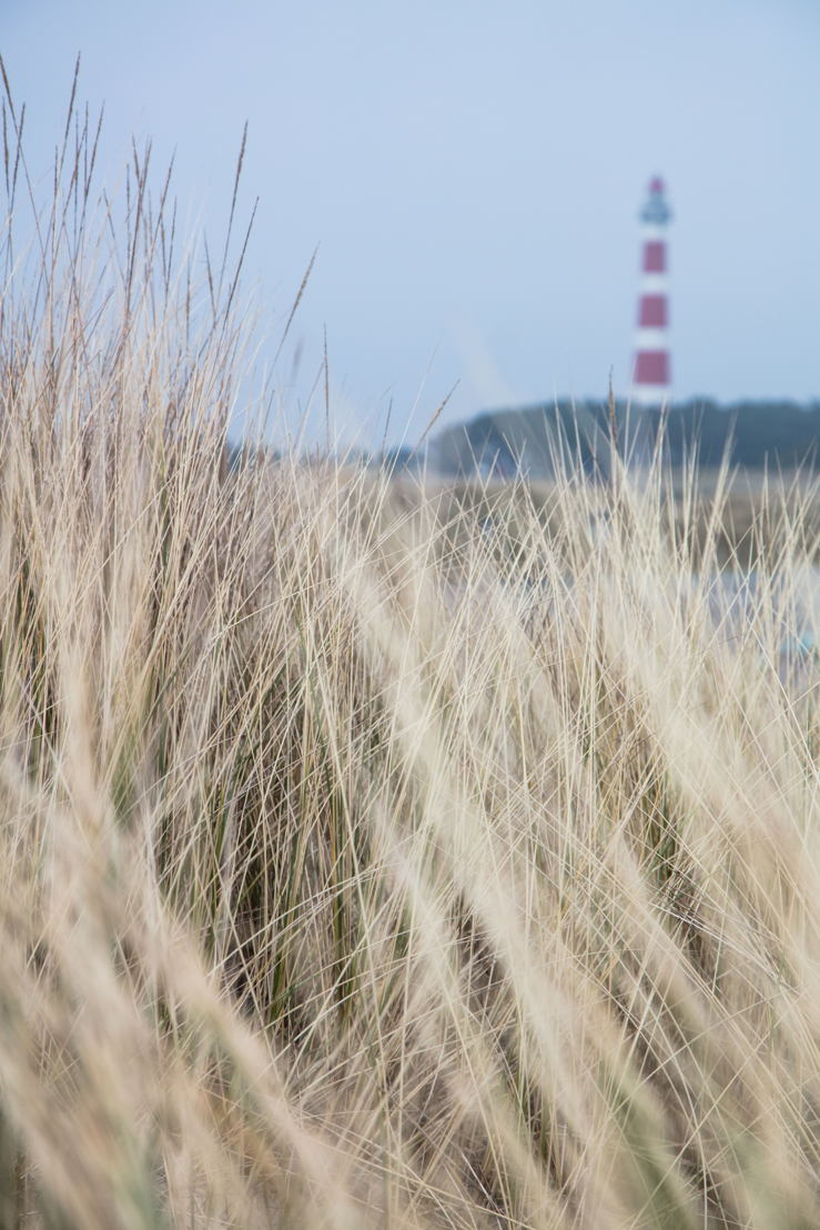 Grasses on sand dune with lighthouse in distance, Hollum, Ameland, West Frisian Islands, Friesland, Netherlands © Holger Leue for Merk Fryslan