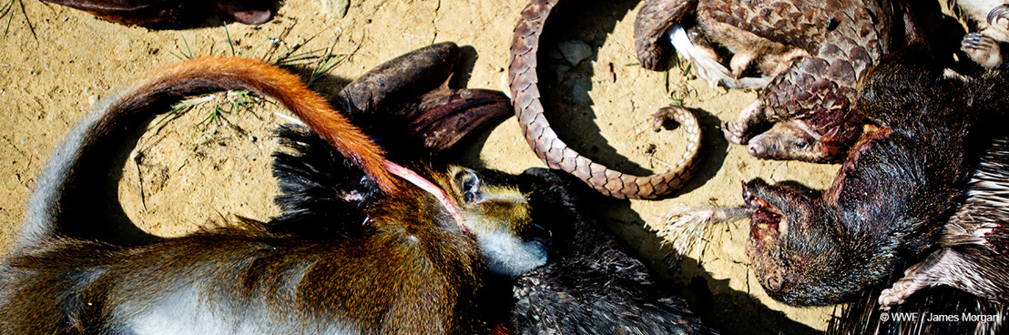 Coronavirus : le commerce d'animaux sauvages alimente le risque de pandémie, selon le WWF