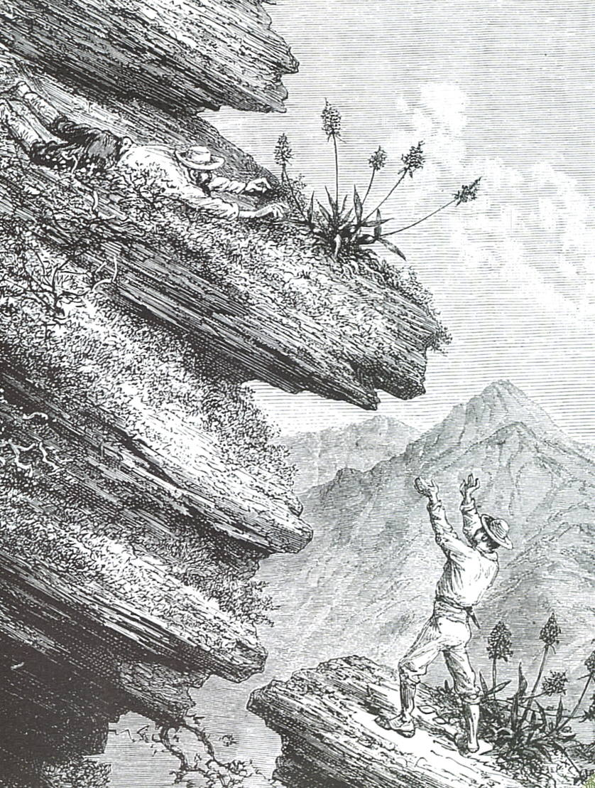 Chapitre 2- Edouard André, naturaliste-collecteur en Amérique du Sud © Association Edouard André