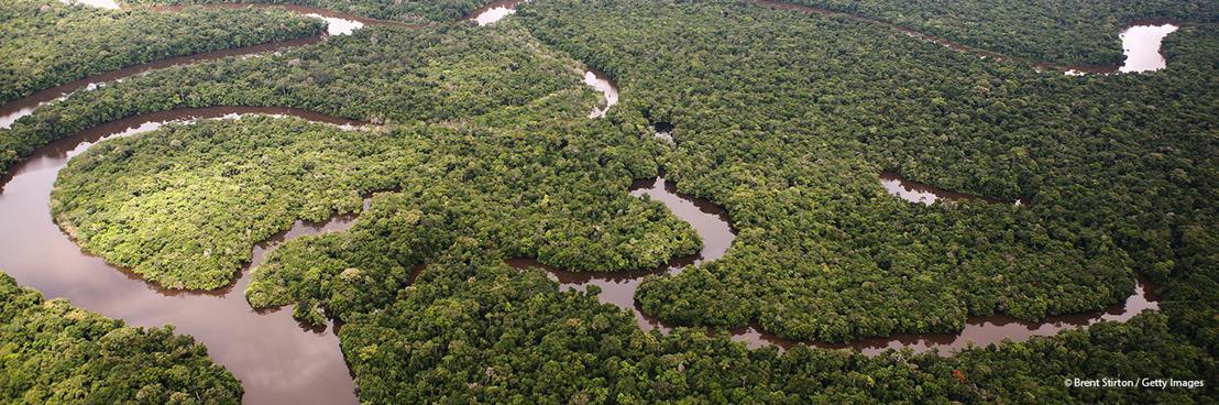 Les nouveaux plans climatiques devraient également aborder le déclin de la biodiversité
