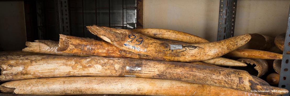 La lutte contre le commerce illégal d'espèces d'animaux et de plantes sauvages monte d'un cran en Belgique - Le WWF demande continuité et vision coordonnée