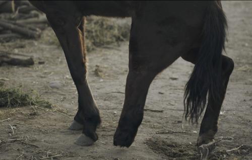 Un nouveau documentaire révèle la maltraitance, la négligence et les activités illégales dont sont victimes les chevaux argentins