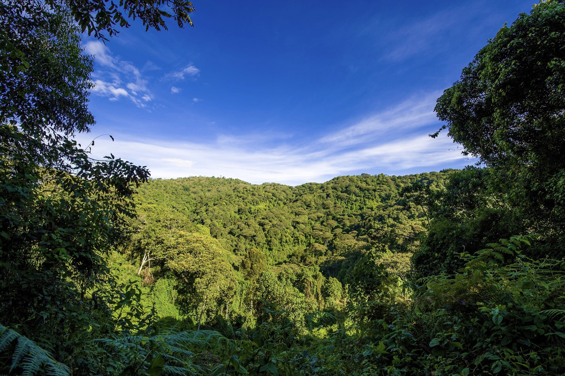 Significant Progress made to Reduce Deforestation and Forest Degradation in St. Lucia