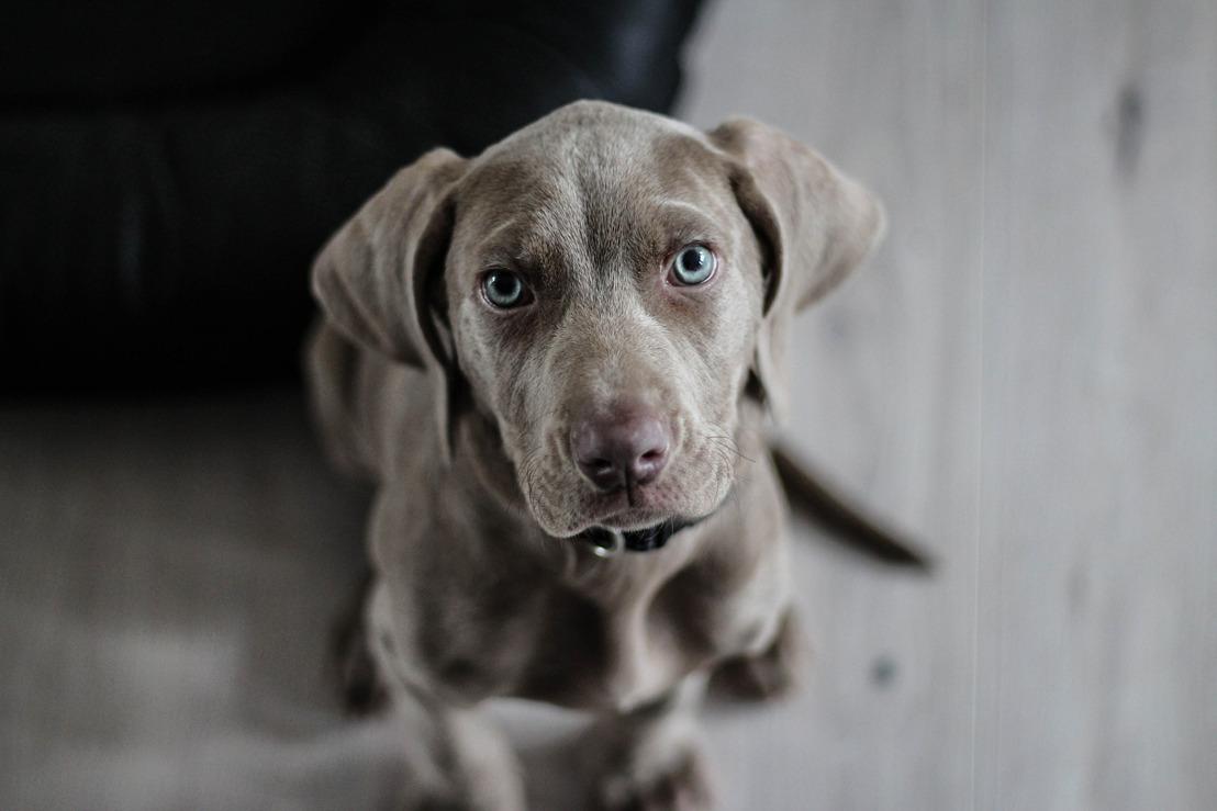 Rechtszaak broodfok // Hondenleed De Poezelhoeve voor de rechtbank
