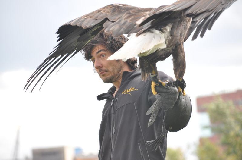 Aflevering 3: de roofvogels -zicht