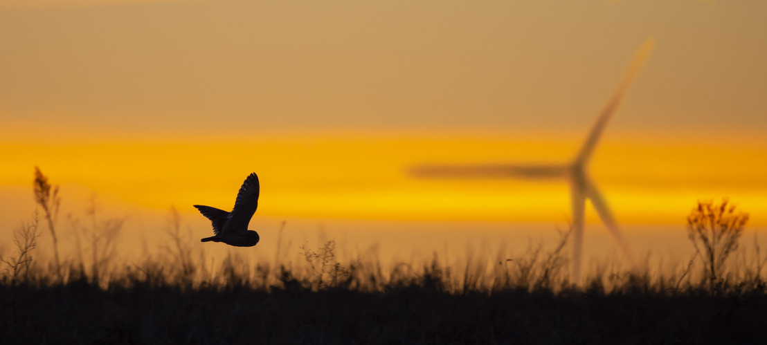Ecologische compensatiemaatregelen in het kader van Luminus windprojecten bevorderen de biodiversiteit en de terugkeer van vogels in het bijzonder