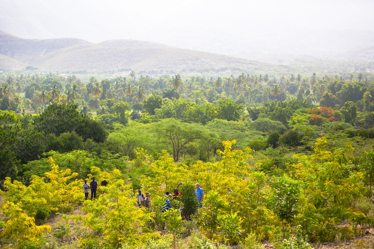Tree Planting Haiti - Credit: Sebastian Petion