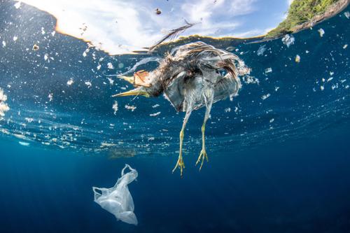Un traitement inadéquat des déchets plastiques fait de la mer Méditerranée un égout à ciel ouvert selon une nouvelle étude du WWF