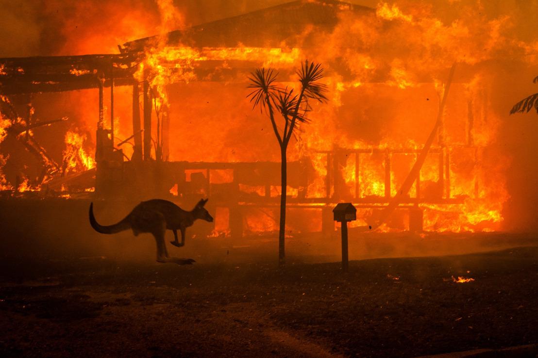 COMMUNIQUÉ DE PRESSE // FEUX DE BROUSSE EN AUSTRALIE : CARREFOUR BELGIUM CESSE DE VENDRE DE LA VIANDE DE KANGOUROU