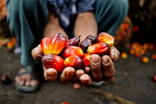 Les entreprises belges ne soutiennent pas pleinement l'huile de palme durable, selon le nouveau baromètre du WWF
