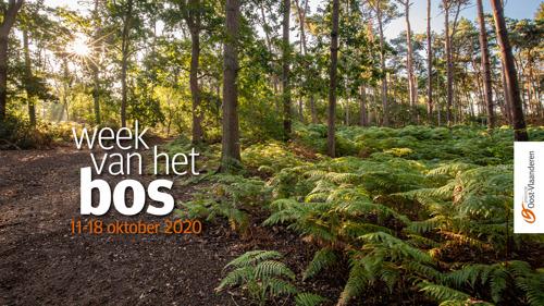 Ontdek de Oost-Vlaamse natuur tijdens de Week van het Bos
