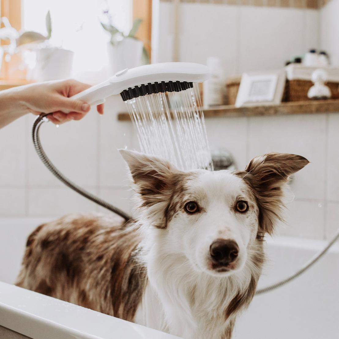 hansgrohe DogShower : sur mesure pour le meilleur ami de l'homme