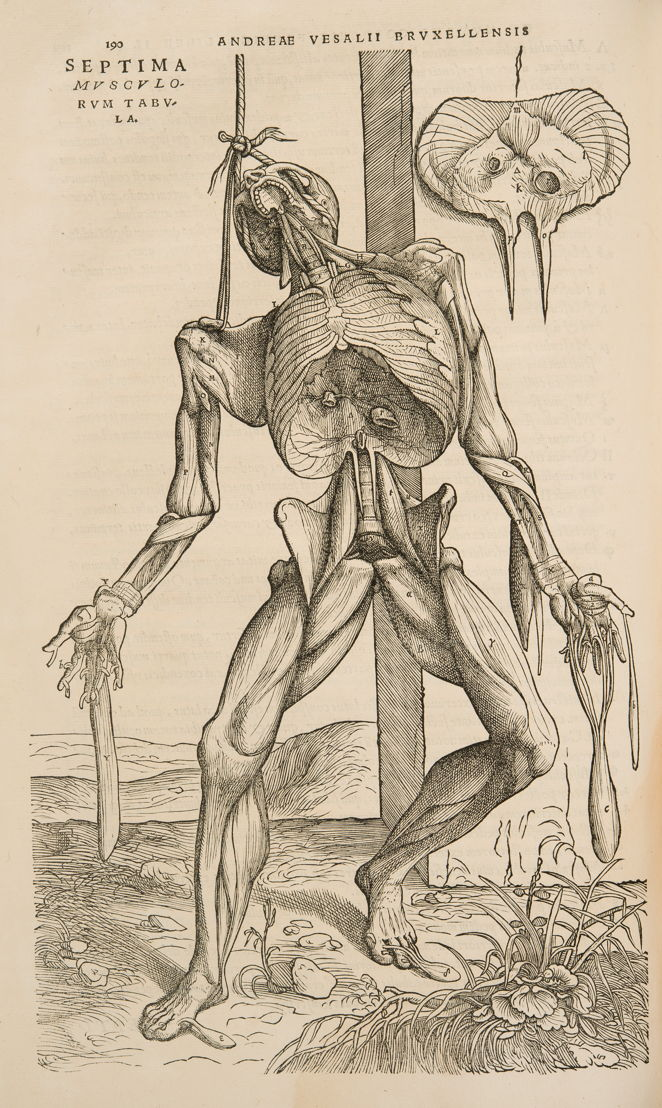 Hanging corps in: Andreas Vesalius, De Humani Corporis Fabrica Libri Septem, Basel, 1543 © KU Leuven, University Library, inv. CaaC17 – Bruno Vandermeulen