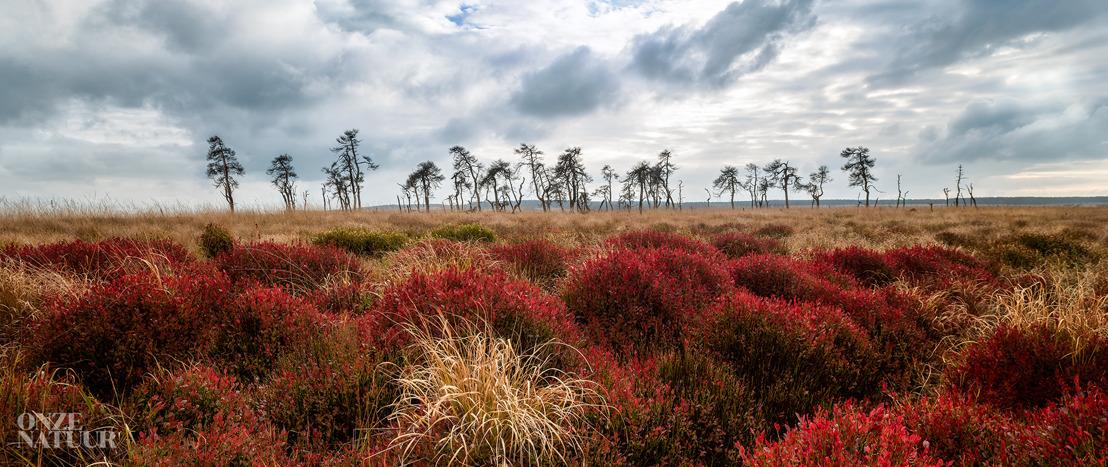 Onze Natuur en Volvo ontdekken het wilde België