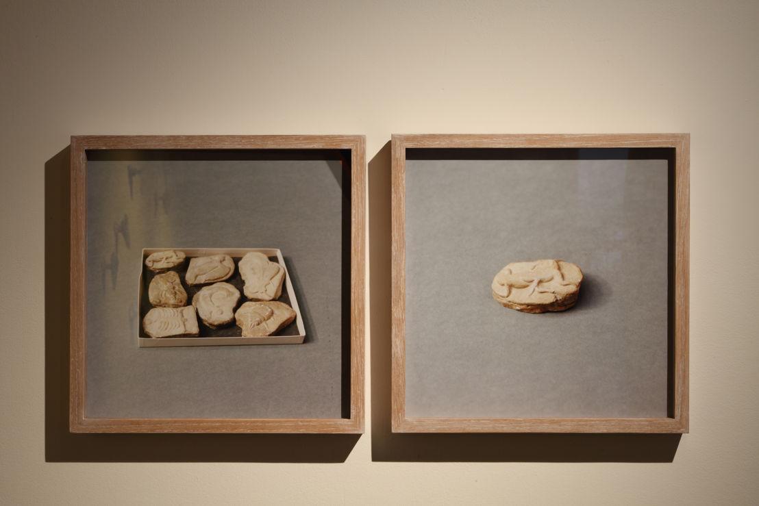 Untitled (Beringer's Lying Stones), 2014-2015, © Natural History Museum, Londen. Courtesy the artist; Sfeir-Semler Gallery, Hamburg/Beirut<br/>Photo (c) Dirk Pauwels