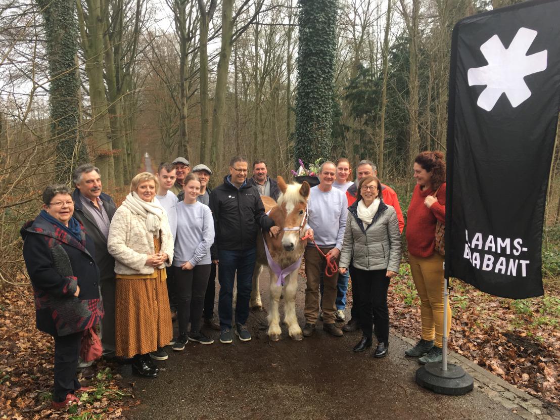 750ste premie voor Brabants trekpaard veulen