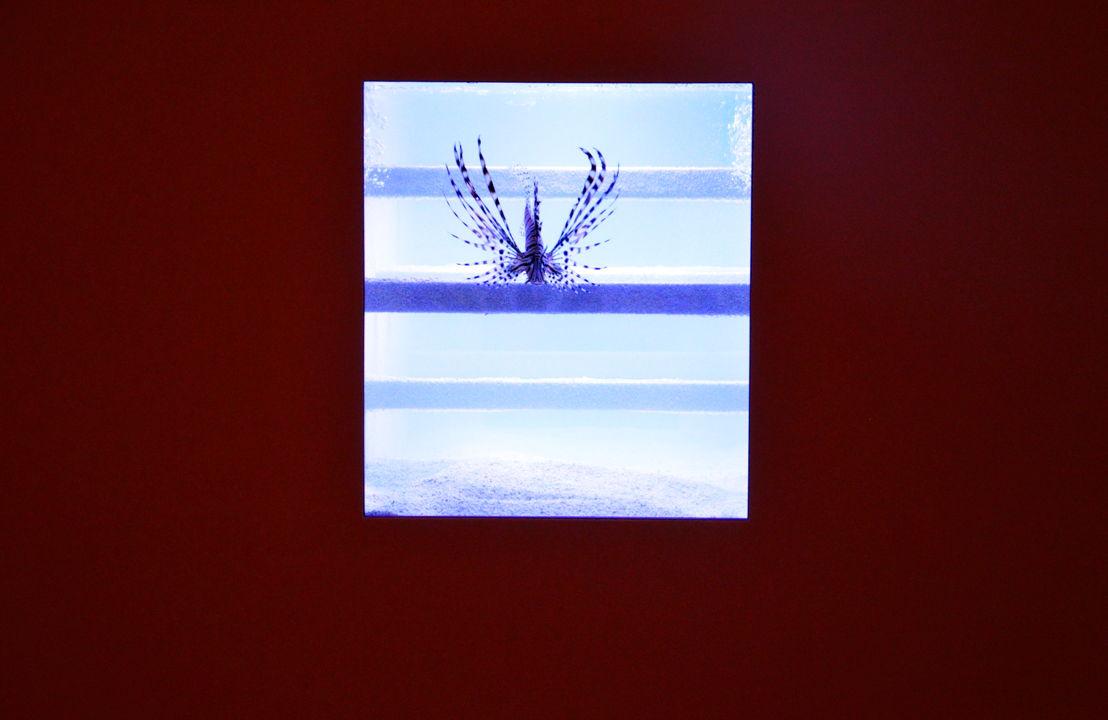 Aquarium (Genf), 2011/2014, © photo: M - Museum Leuven