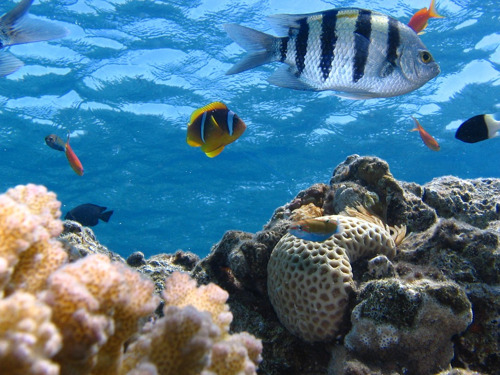 UN agencies and regional partners convene on sustainable fisheries and a healthier marine environment