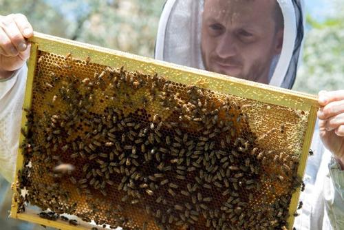Lidl accueille quelque 300.000 abeilles aux abords de ses magasins et produira cette année 72kg de miel urbain
