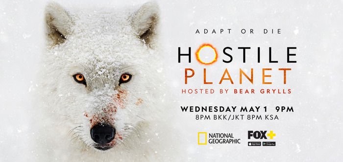 Preview: National Geographic showcases Earth's most resilient species in epic natural history series Hostile Planet