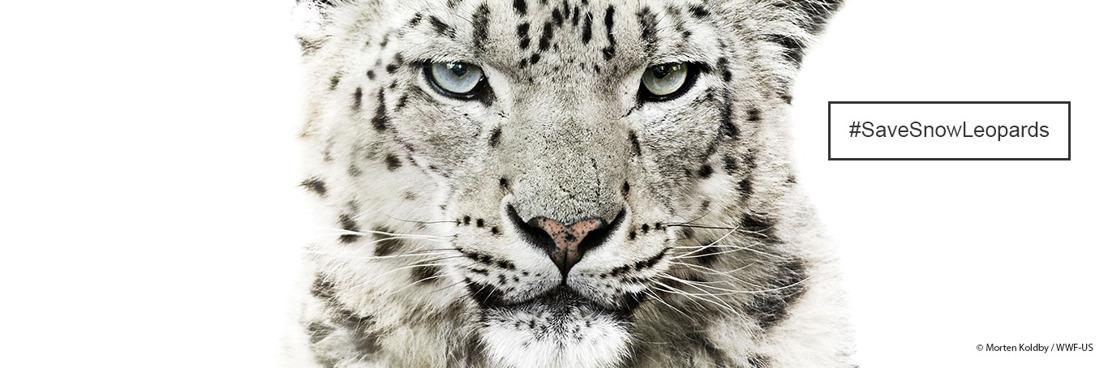 Un sommet crucial pour sauver le léopard des neiges et son habitat