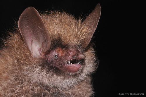 163 nieuwe soorten ontdekt in Mekong gebied