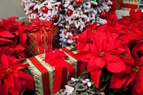 Preview: Pike Nurseries offers fresh and fragrant décor for the holidays