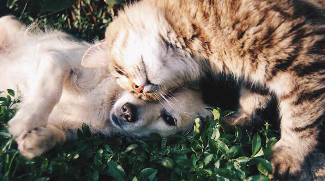 Pinterest presenta: La guía para recibir a tu nueva mascota en casa de la mejor manera