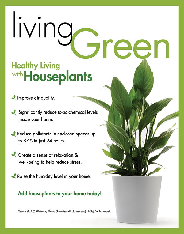 Houseplant Benefits Infographic