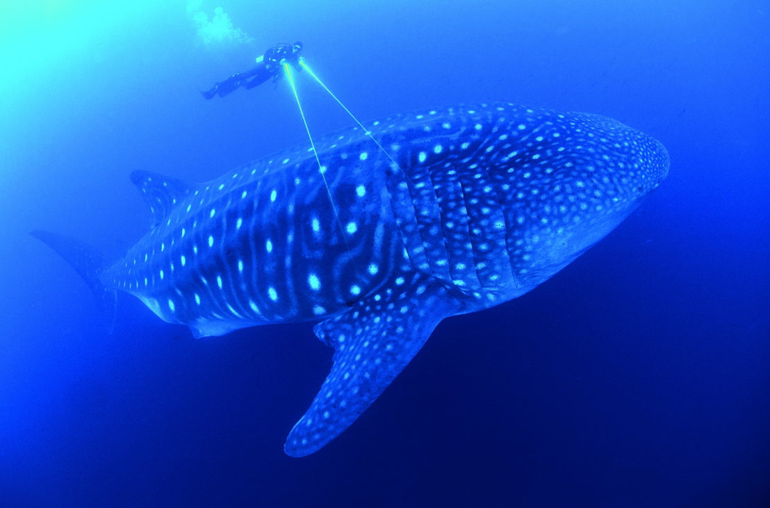 Afl 7: Our Blue Planet - (c) BBC