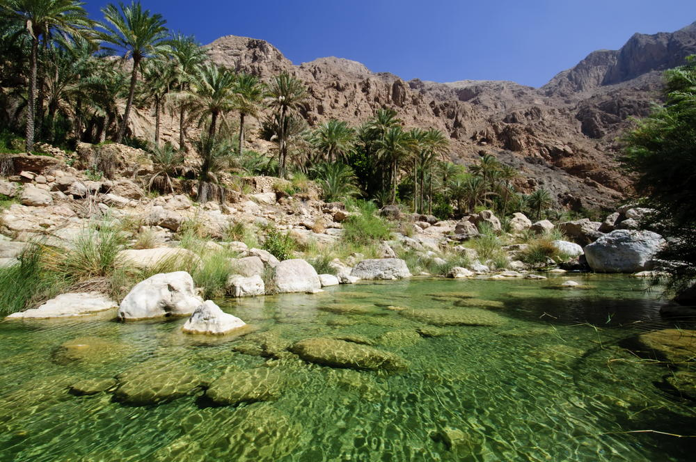 Oasis in the Omani desert