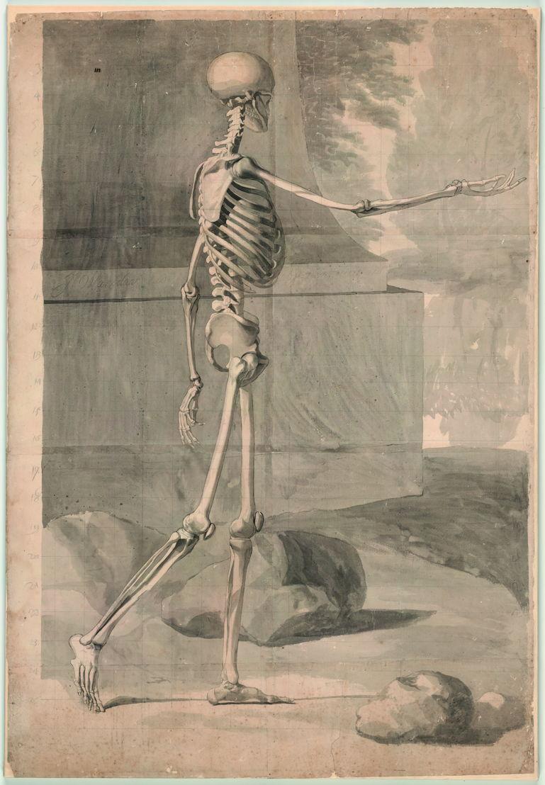 Jan Wandelaar, Dessin de squelette en guise de préparation à Albinus, Tabulae sceleti et musculorum [Cat. 34], pierre noir et lavis gris sur papier, vers 1726 © Bibliothèque universitaire, Leyden, inv. BPL 1914 III.