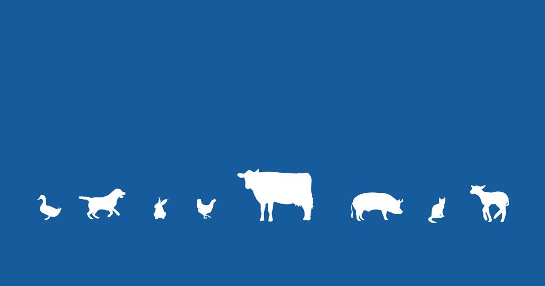 Morgen, Werelddierendag: GAIA wil dierenrechten in de Grondwet